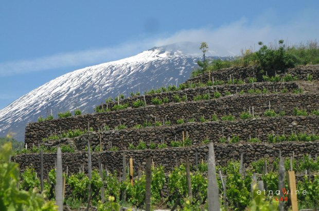 Image result for wine Mount Etna